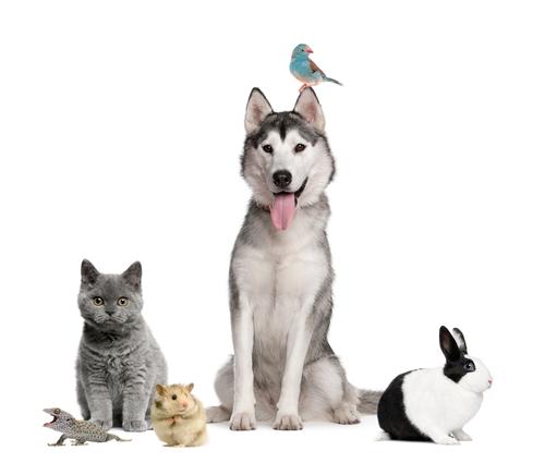 Alquilo: ¿mascotas sí o mascotas no?
