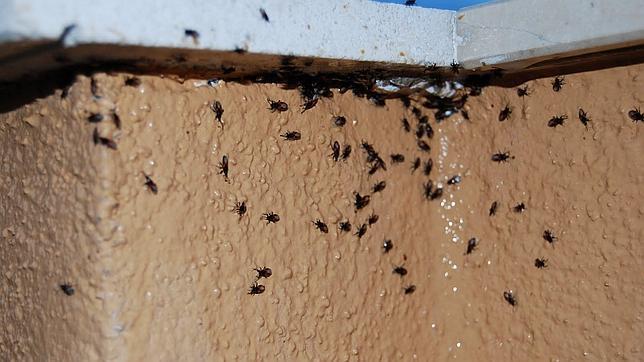 Cómo combatir plagas de hormigas, mosquitos o cucarachas en casa