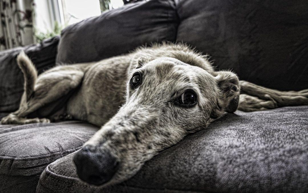¿Puedo alquilar un piso si tengo mascota?